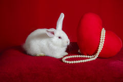 White rabbit and  heart white pearls Stock Images
