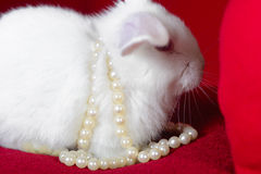 White rabbit and  heart white pearls Royalty Free Stock Photo