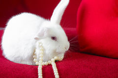 White rabbit and  heart white pearls Royalty Free Stock Photos