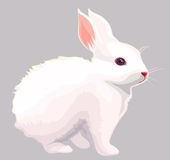 White rabbit. Illustration of a white rabbit, easter, bunny Royalty Free Stock Image