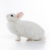 White rabbit isolated on white. Background stock photo