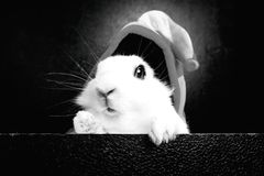 White rabbit with cap on a black background Royalty Free Stock Photos