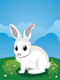 White Rabbit on Lawn Royalty Free Stock Image