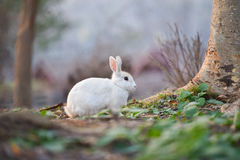 White Rabbit. In nature garden stock images