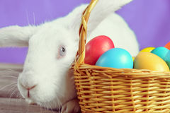 White rabbit near a basket Stock Images