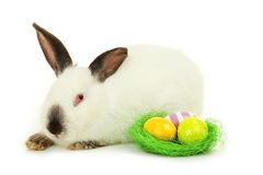 White rabbit with nest and eggs isolated on white Stock Images