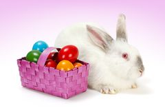 White rabbit with Easter eggs in basket Stock Images