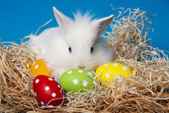 White rabbit and painted easter eggs Royalty Free Stock Image