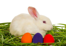 White rabbit with painted eggs Royalty Free Stock Images