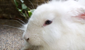 White rabbit in the park Royalty Free Stock Photos