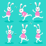 White rabbit 6 poses Stock Images