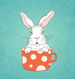 White rabbit in a red cup Royalty Free Stock Images