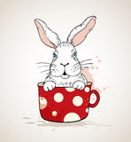White rabbit in a red cup Stock Photos