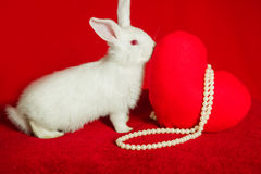 White rabbit and red heart white pearls Stock Images