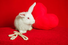 White rabbit and red heart white pearls Stock Image