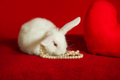 White rabbit and red heart white pearls Royalty Free Stock Photos