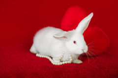 White rabbit and red heart white pearls Stock Photography