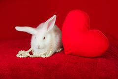 White rabbit and red heart white pearls Royalty Free Stock Image