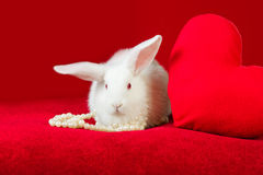 White rabbit and red heart white pearls Royalty Free Stock Images