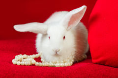 White rabbit and red heart white pearls Stock Photos