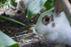 White rabbit in the shade Stock Photo
