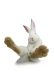 White rabbit Stock Photography