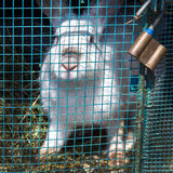 White rabbit sits in a cage Royalty Free Stock Images