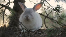 White rabbit in a summer forest stock video footage