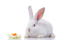 White rabbit with vegetables Stock Image