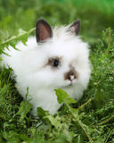 White rabbit on walk Stock Photography