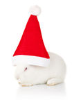 White rabbit wearing a santa hat Royalty Free Stock Photos