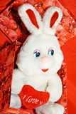 White rabbit whit heart in the red box Royalty Free Stock Photo