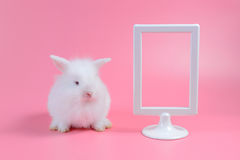 White rabbit and white picture frame on pink background Stock Image