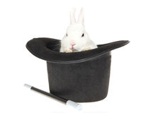 White Rabbit With Black Top Hat Royalty Free Stock Image