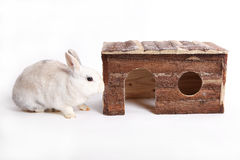 White rabbit with wooden house Royalty Free Stock Images