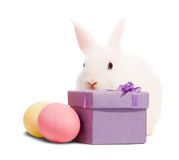 White rabbits with present box Royalty Free Stock Photography