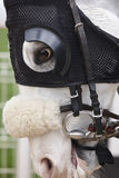 White race horse head with blinkers. Paddock area. Vertical Stock Images