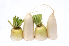 White radish Stock Photography