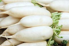 White radish. The close-up of white radish Stock Photo