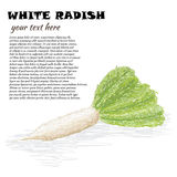 White radish Royalty Free Stock Photo