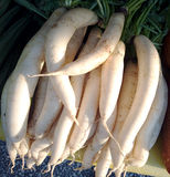 White radish at an agricultural flea market Royalty Free Stock Photos