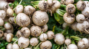 White Radish. A bunch of fresh radishes for sale at a market Royalty Free Stock Image