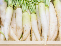White radish harvested products on wooden planks Stock Photos