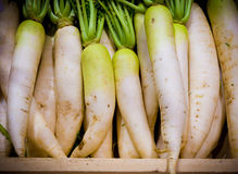White radish harvested products on wooden planks.  Stock Photography