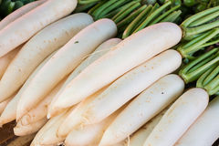 White radish Royalty Free Stock Images