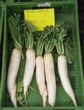 White radishes royalty free stock photos