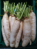 White radishes Royalty Free Stock Image