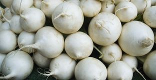 Fresh white radishes at farmer´s market. White radishes laid out for sale at a stall at weekly market Royalty Free Stock Photography