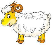 White ram Royalty Free Stock Image