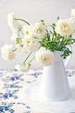 White Ranunculus flower Stock Photos
